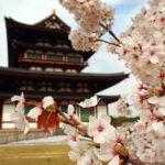 7035951-japan-sakura-blossom-temple