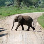 elephant-724637_960_720