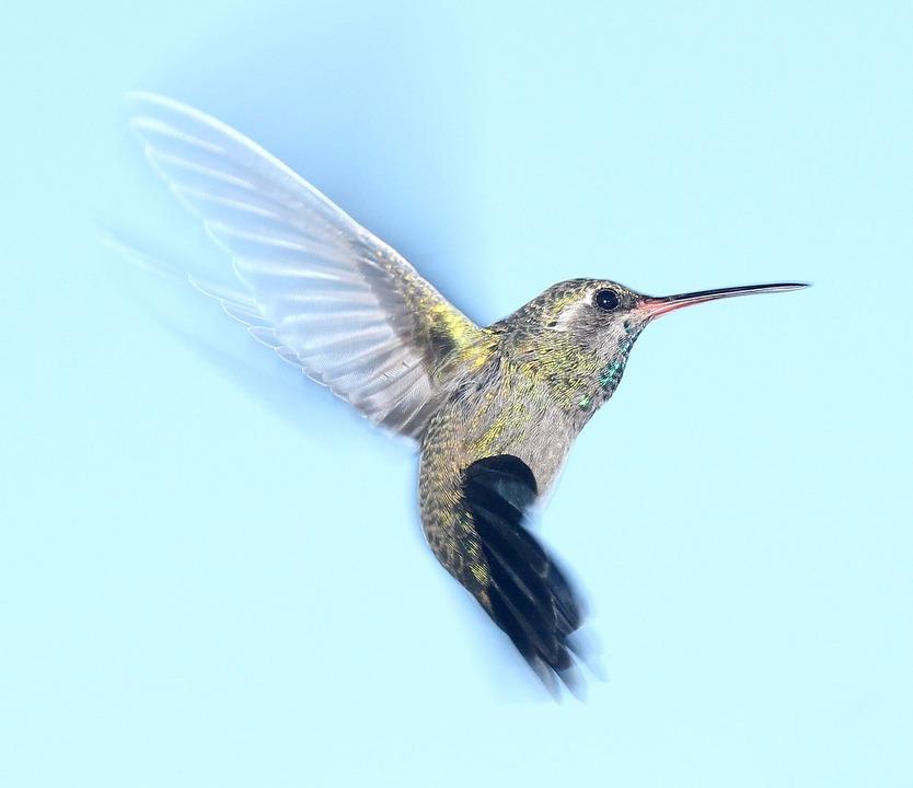 hummingbird-1047836_960_720