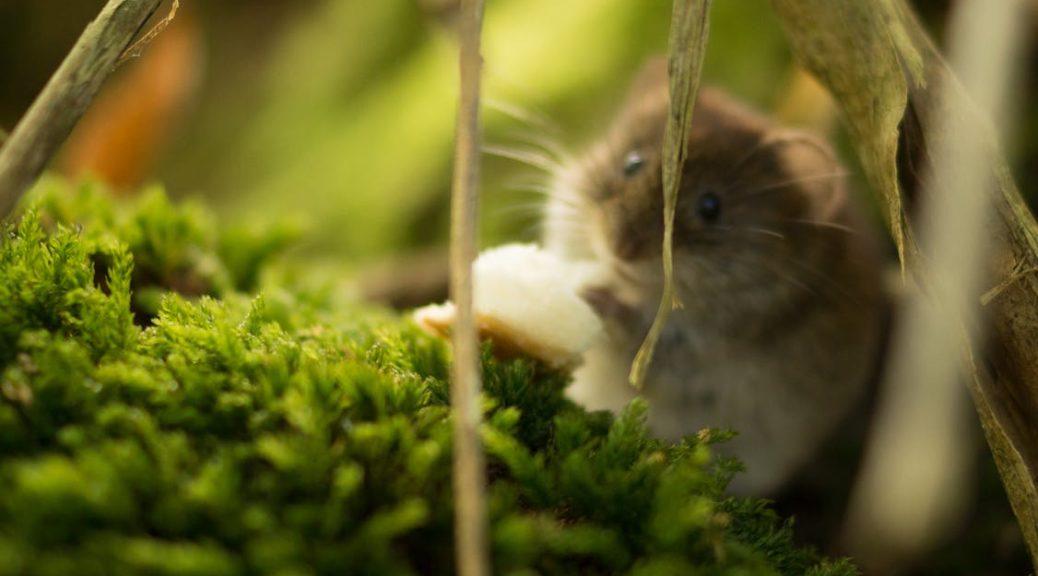 nature-animal-mouse-beautiful